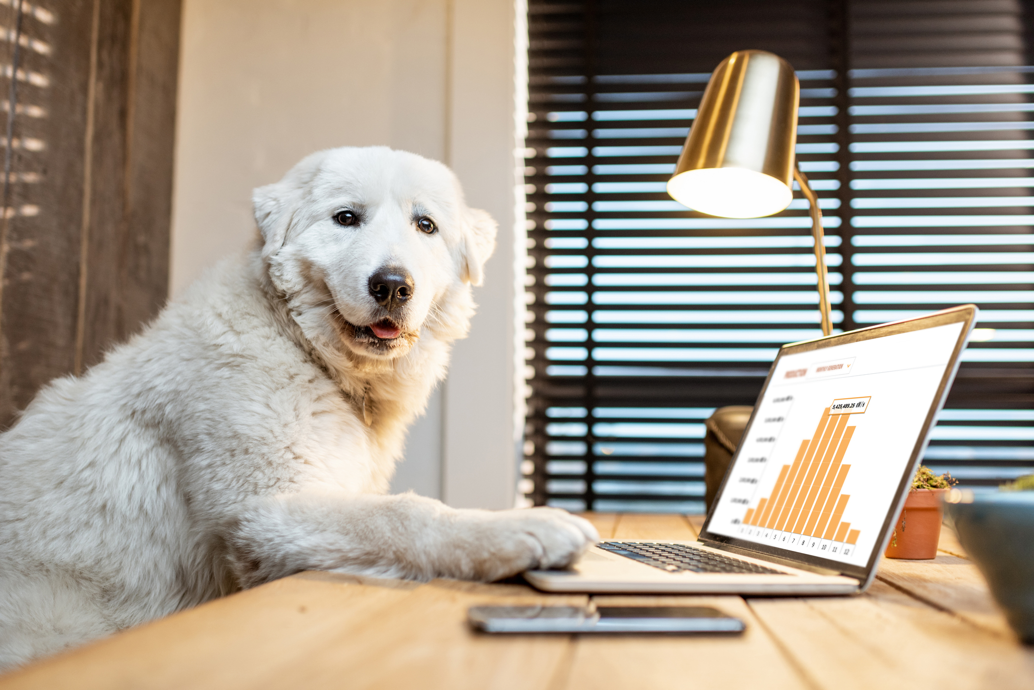Gingr-Payments-Dog