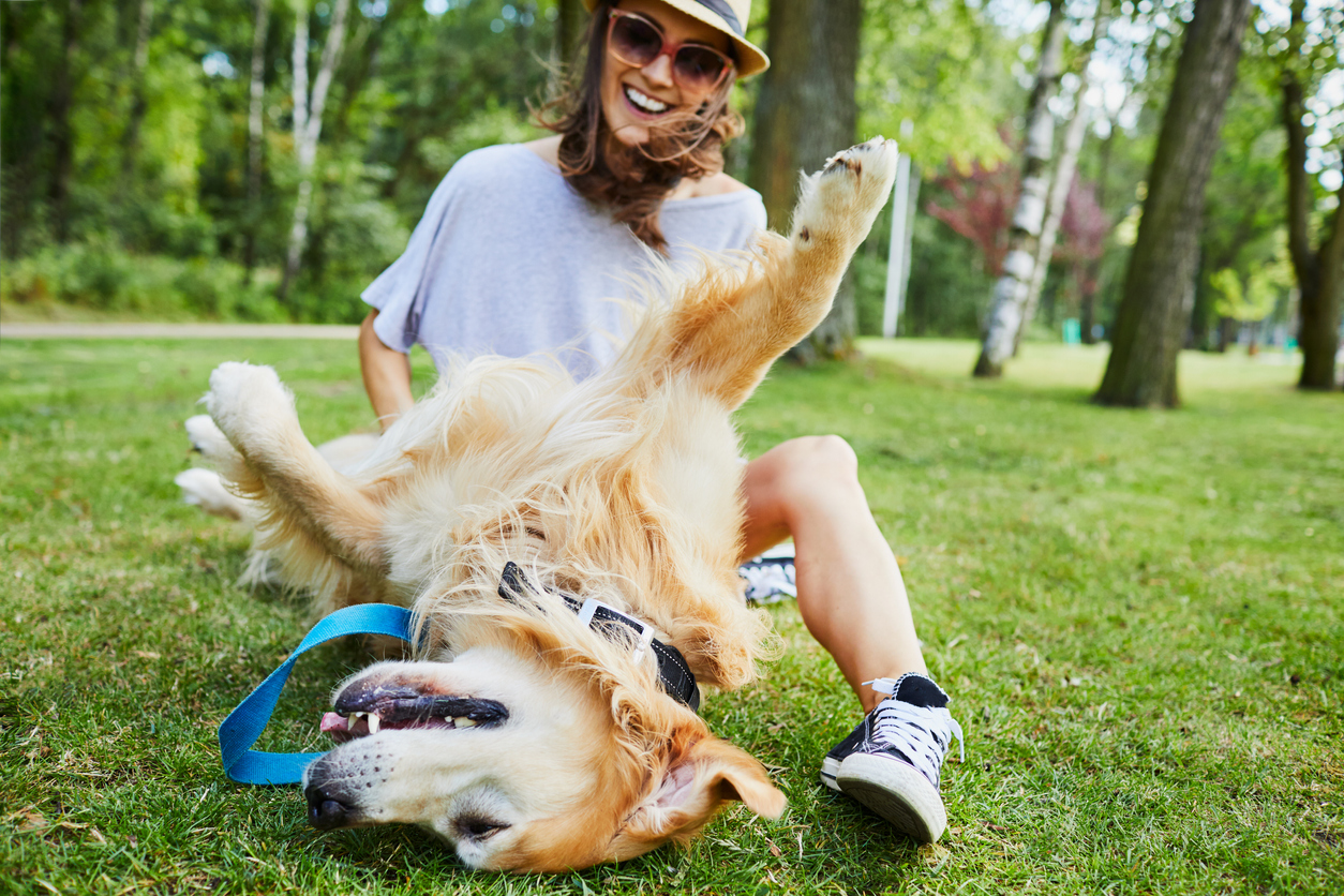 Pet-Care Payments Review